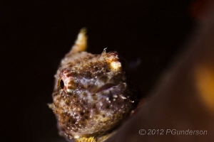 Just Hanging On